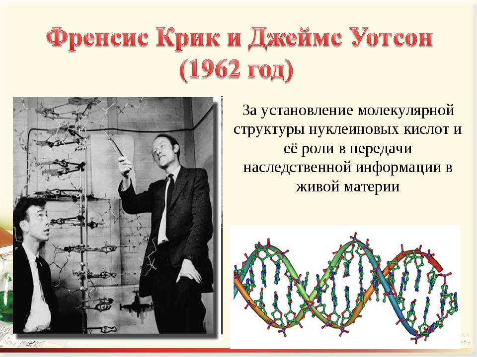 За установление молекулярной структуры нуклеиновых кислот и её роли в передач...
