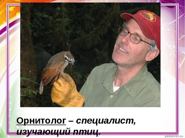 Орнитолог – специалист, изучающий птиц.
