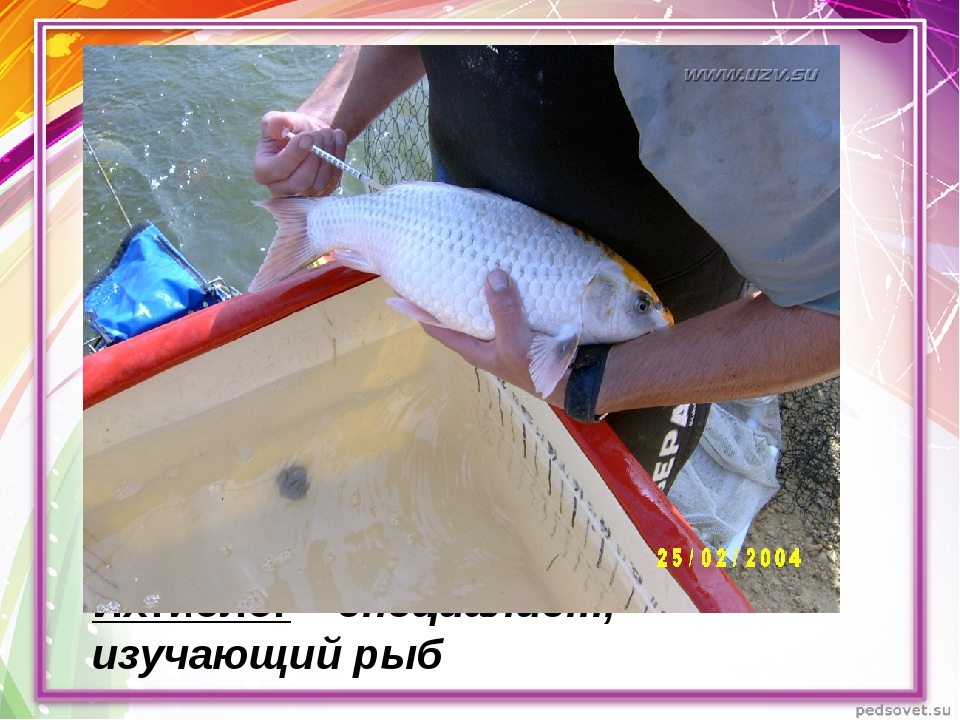 Ихтиолог – специалист, изучающий рыб