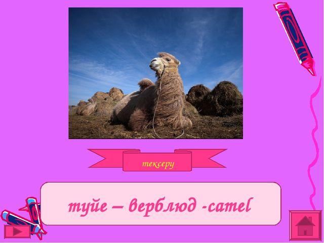 тексеру Задание түйе – верблюд -camel