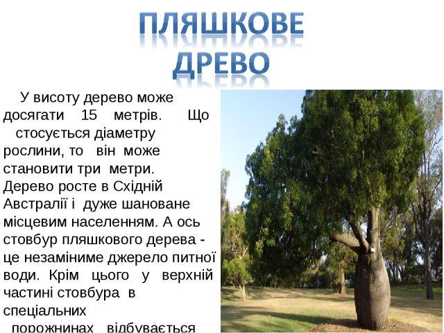 У висоту дерево може досягати 15 метрів. Що стосується діаметру рослини, то...