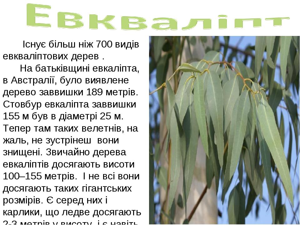 Існує більш ніж 700 видів евкваліптових дерев . На батьківщині евкаліпта, в...