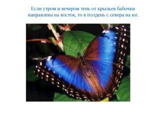 Если утром и вечером тень от крыльев бабочки направлена на восток, то в полде
