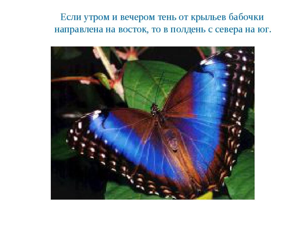 Если утром и вечером тень от крыльев бабочки направлена на восток, то в полде...