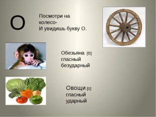 О Обезьяна [о] гласный безударный Овощи [о] гласный ударный Посмотри на колес