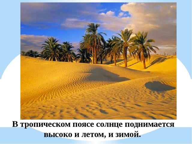 В тропическом поясе солнце поднимается высоко и летом, и зимой.