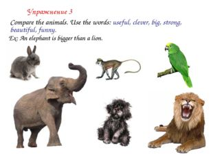 Упражнение 3 	Compare the animals. Use the words: useful, clever, big, strong
