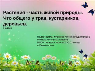 Растения - часть живой природы. Что общего у трав, кустарников, деревьев. 1