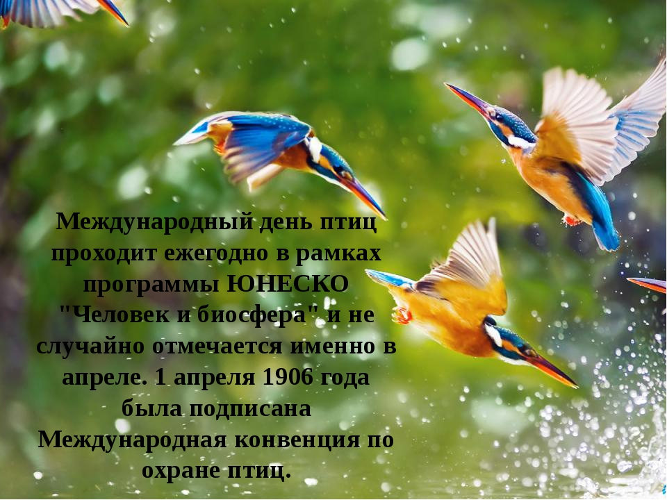 Стихи дружбе, картинки на день птиц