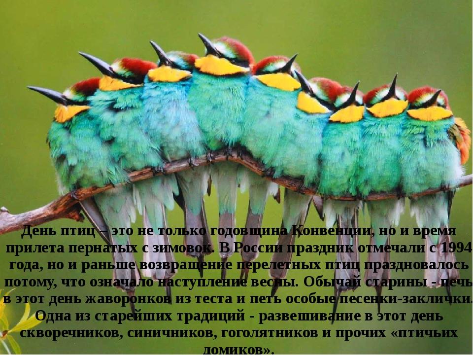 День птиц – это не только годовщина Конвенции, но и время прилета пернатых с...