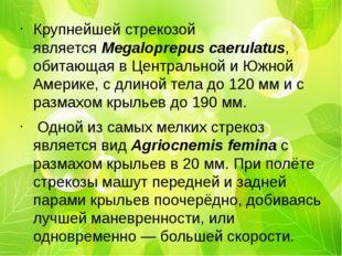 Крупнейшей стрекозой являетсяMegaloprepus caerulatus, обитающая вЦентрально