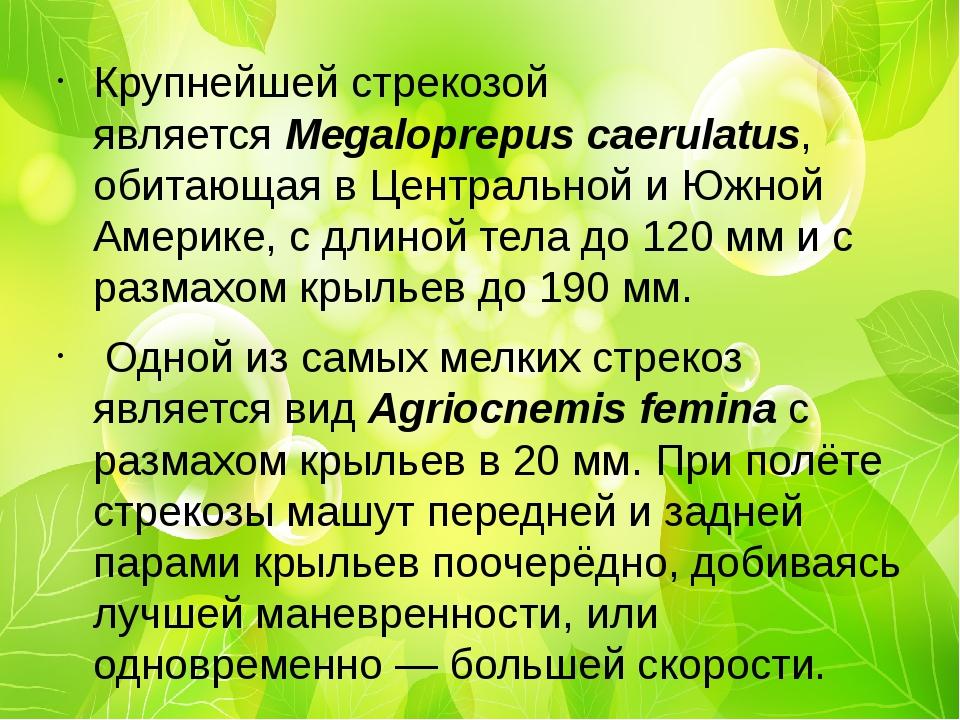 Крупнейшей стрекозой являетсяMegaloprepus caerulatus, обитающая вЦентрально...