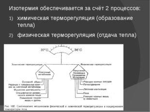 Изотермия обеспечивается за счёт 2 процессов: химическая терморегуляция (обра