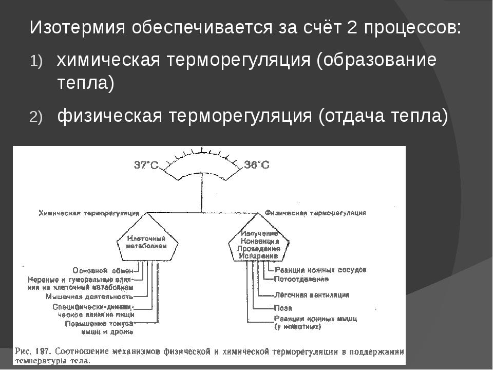 Изотермия обеспечивается за счёт 2 процессов: химическая терморегуляция (обра...