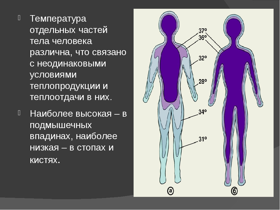 Температура отдельных частей тела человека различна, что связано с неодинаков...