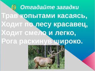 Отгадайте загадки Трав копытами касаясь, Ходит по лесу красавец, Ходит смело