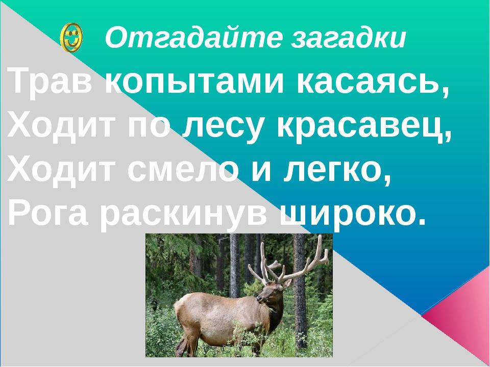 Отгадайте загадки Трав копытами касаясь, Ходит по лесу красавец, Ходит смело...