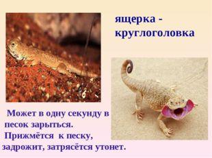 ящерка - круглоголовка Может в одну секунду в песок зарыться. Прижмётся к пес