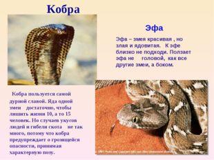 Кобра Кобра пользуется самой дурной славой. Яда одной змеи достаточно, чтобы