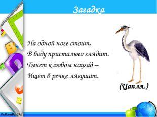 Интернет ресурсы: http://www.lenagold.ru/ - картинки-отгадки Загадки для дете