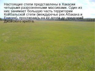 Настоящие степи представлены в Хакасии четырьмя разрозненными массивами. Один