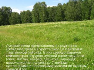 Луговые степи представлены в предгорьях Джойского хребта и хребта Кирса в Бей