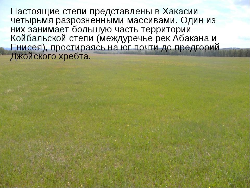 Настоящие степи представлены в Хакасии четырьмя разрозненными массивами. Один...