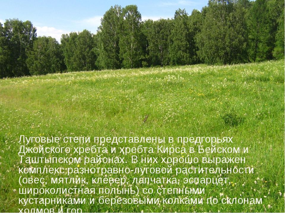 Луговые степи представлены в предгорьях Джойского хребта и хребта Кирса в Бей...