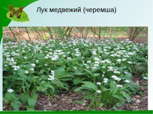 Интернет - источники http://greenword.ru/images/luguang09.jpg мир на грани эк