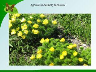 Презентацию подготовила учитель биологии КУ Александровская гимназия Сумского