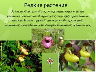 Редкие растения К числу обитателей заказника относятся и такие растения, зан