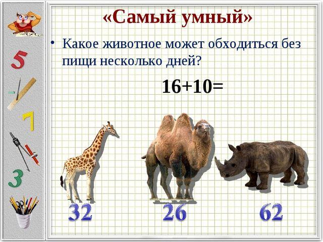 «Самый умный» Какое животное может обходиться без пищи несколько дней? 16+10=