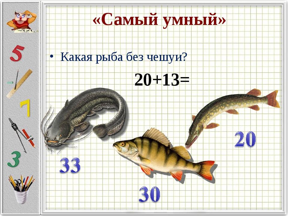 «Самый умный» Какая рыба без чешуи? 20+13=