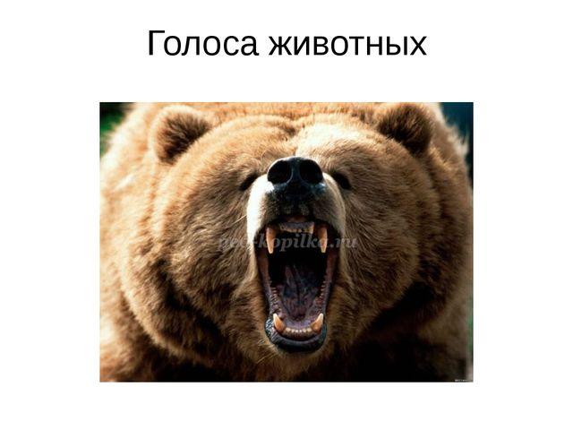Голоса животных