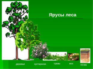 деревья кустарники травы мхи почва Ярусы леса