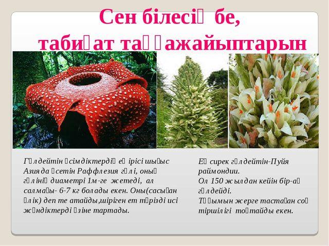 Сен білесің бе, табиғат таңғажайыптарын Гүлдейтін өсімдіктердің ең ірісі шығы...