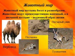 Животный мир Животный мир пустынь богат и разнообразен. Животные ведут преиму