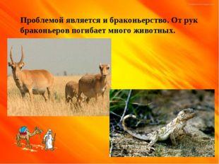 Песчаный ужик Проблемой является и браконьерство. От рук браконьеров погибает