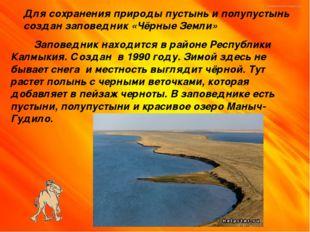 Для сохранения природы пустынь и полупустынь создан заповедник «Чёрные Земли»
