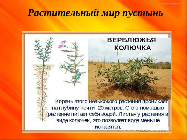 Растительный мир пустынь