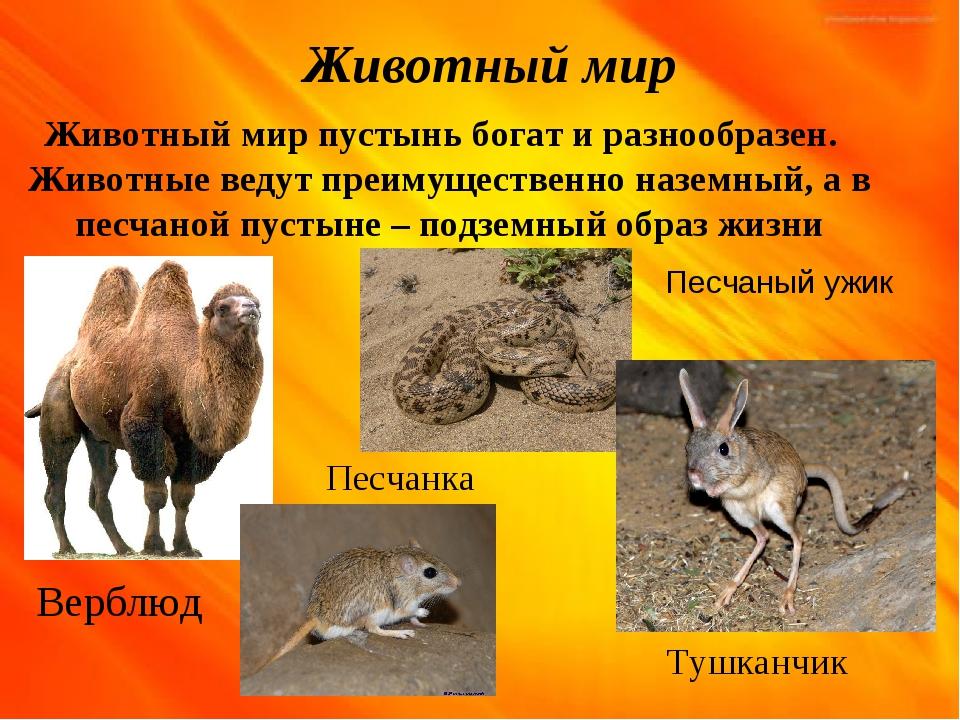 Животный мир Животный мир пустынь богат и разнообразен. Животные ведут преиму...