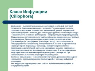 Класс Инфузории (Ciliophora) Инфузории – высокоорганизованные простейшие со с