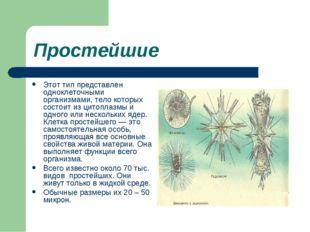 Простейшие Этот тип представлен одноклеточными организмами, тело которых сост