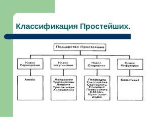 Классификация Простейших.