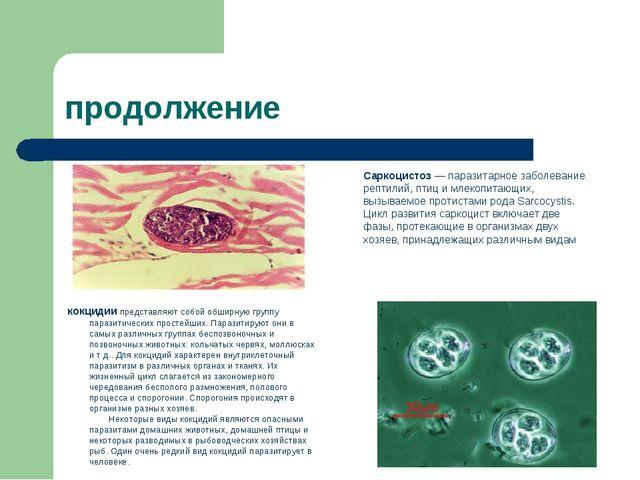 продолжение Саркоцистоз — паразитарное заболевание рептилий, птиц и млекопита...