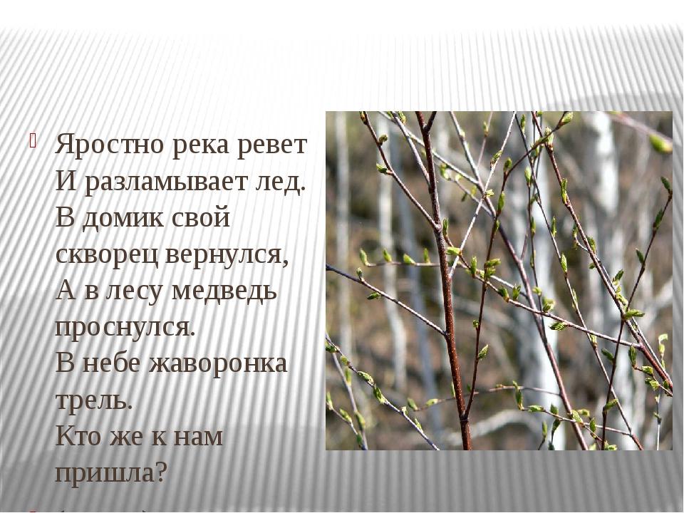 Яростно река ревет И разламывает лед. В домик свой скворец вернулся, А в лес...