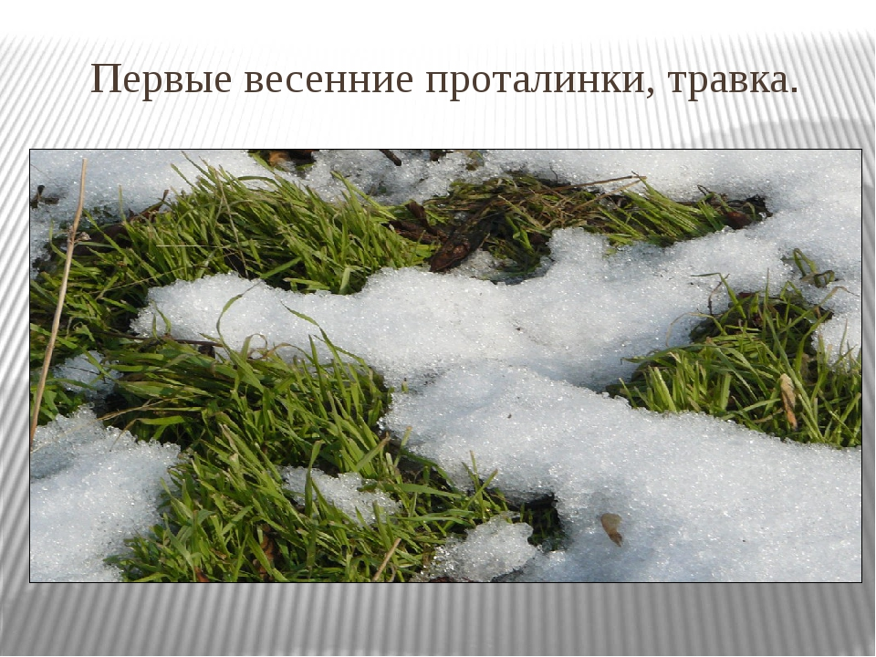 Первые весенние проталинки, травка.