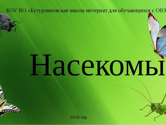 Насекомые КОУ ВО «Бутурлиновская школа-интернат для обучающихся с ОВЗ» 2016...
