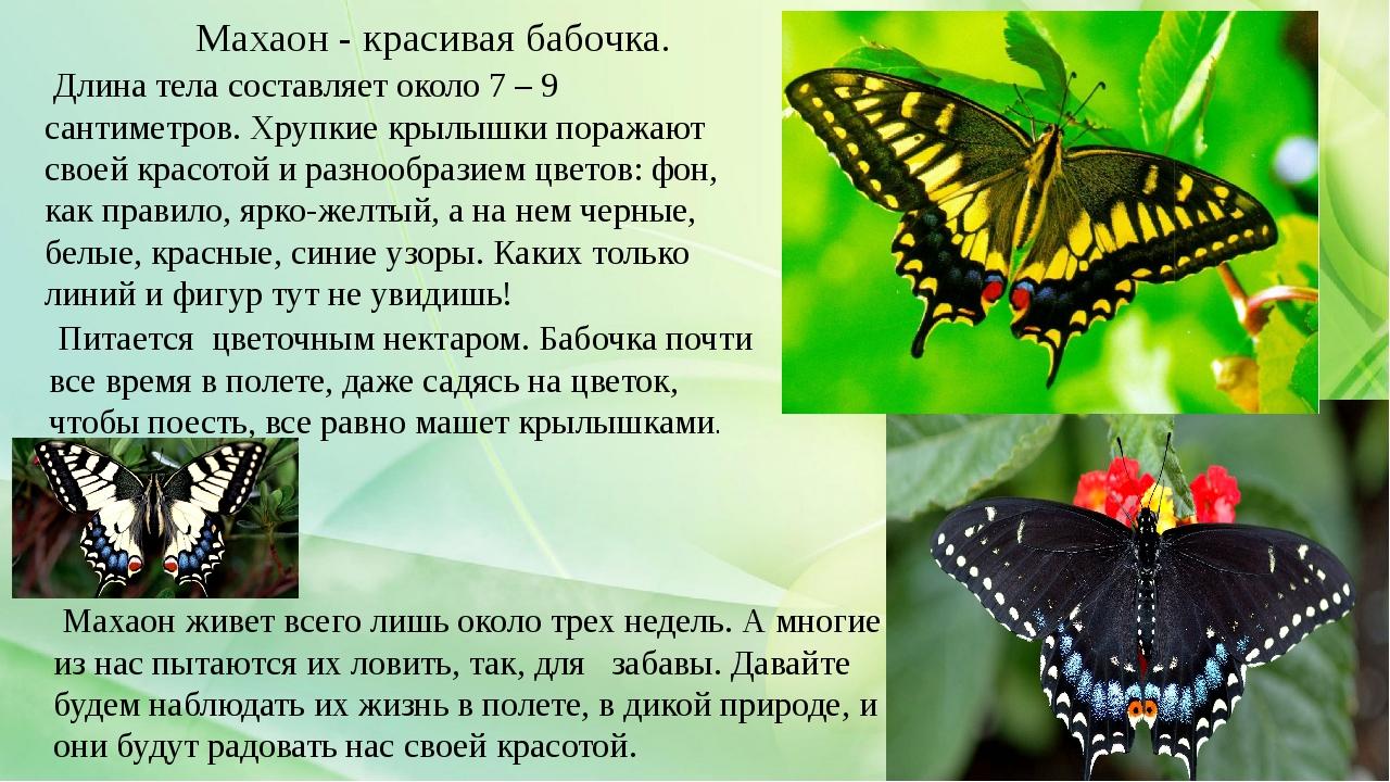 Длина тела составляет около 7 – 9 сантиметров. Хрупкие крылышки поражают сво...