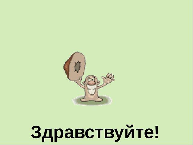 Л Е С хвойный лиственный смешанный Т А Й Г А